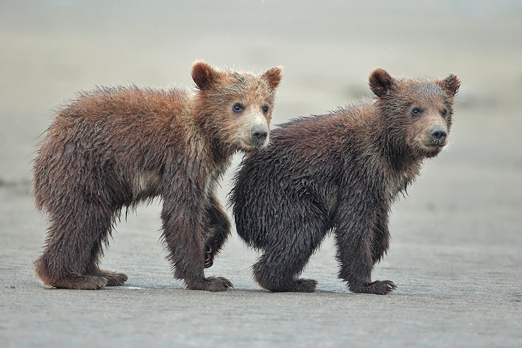Cubs at the beach