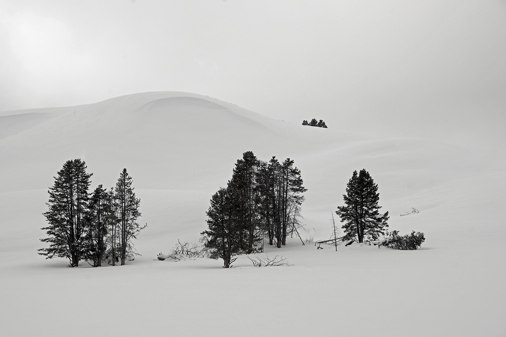 Cindi Probst Snow dune and trees