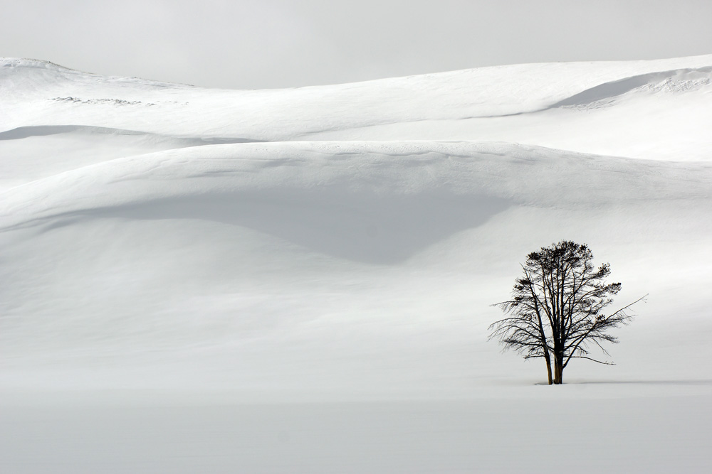 Cindi Probst Snow dunes and tree