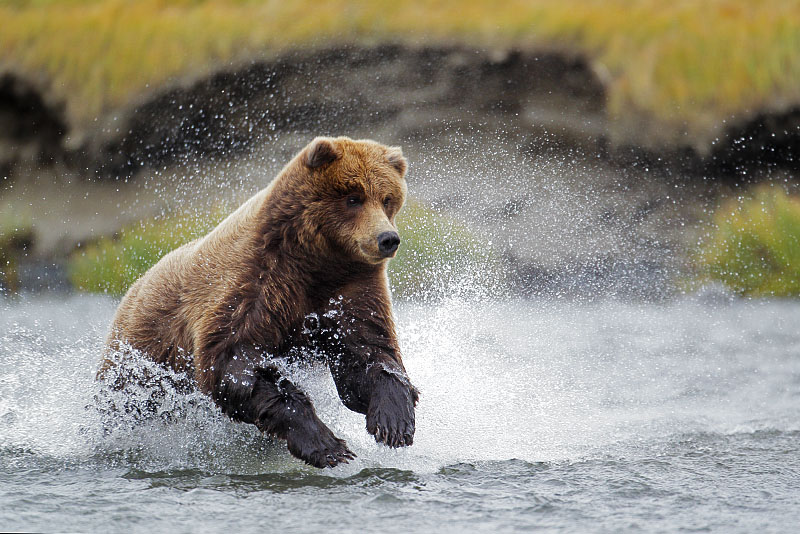 fishingbear1