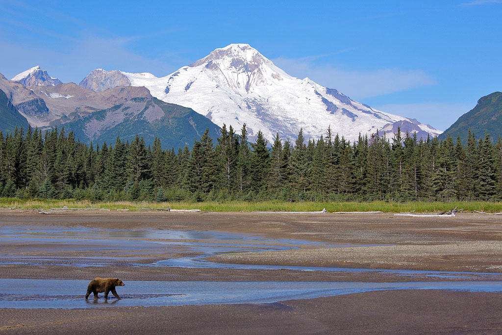 Brown Bear with Mt. Illiamna